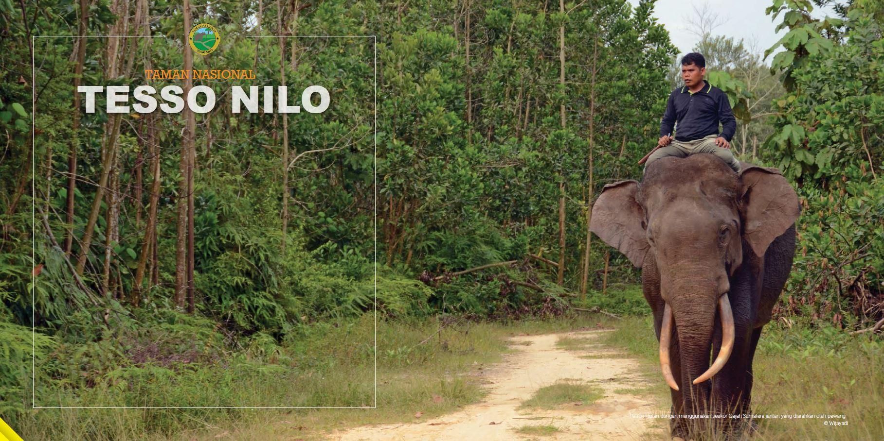 Tesso Nilo