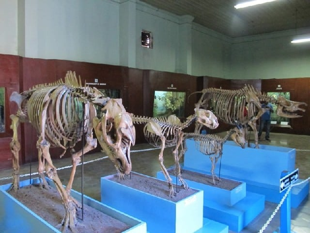 Museum Zeologi Istana bogor